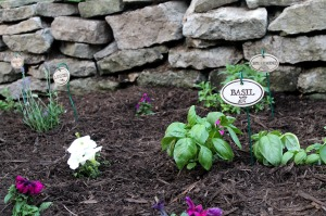 herb garden | polka dots and picket fences
